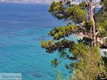 Bomen totaan het strand van Kokkari (Tsamadou) - Eiland Samos - Foto van De Griekse Gids