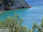 Olijfbomen tot aan de zee - Lemonakia bij Kokkari- Eiland Samos - Foto van De Griekse Gids