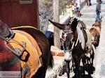 Fira Santorini (Thira) - Foto 67 - Foto van De Griekse Gids