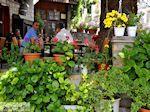 Potamia Thassos | Griekenland | Foto 8 - Foto van De Griekse Gids