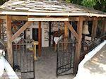 Skala Potamias | Thassos Griekenland | Foto 3 - Foto van De Griekse Gids