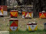 GriechenlandWeb.de Van Skala Maries naar Maries | Thassos | Foto 2 - Foto GriechenlandWeb.de