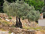 Van Skala Maries naar Maries | Thassos | Foto 7 - Foto van De Griekse Gids