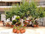 Limenas  - Thassos stad |Griekenland | Foto 1 - Foto van De Griekse Gids