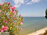 Skala Sotiros | Thassos | Foto 7 - Foto van De Griekse Gids