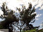 Prinos en Skala Prinos | Thassos | Foto 13 - Foto van De Griekse Gids