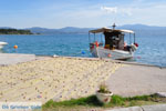 Eretria | Evia Griekenland | De Griekse Gids - foto 005 - Foto van De Griekse Gids