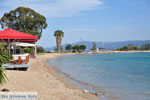Eretria | Evia Griekenland | De Griekse Gids - foto 017 - Foto van De Griekse Gids