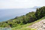 Kymi | Evia Griekenland | De Griekse Gids - foto 002 - Foto van De Griekse Gids