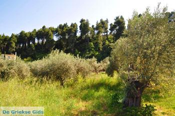 Gouves Noord-Evia | Griekenland | Foto 1 - Foto van De Griekse Gids