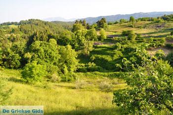 Papades Noord-Evia | Griekenland | De Griekse Gids foto 14 - Foto van De Griekse Gids