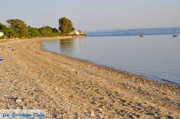 Rovies Noord-Evia | Griekenland | De Griekse Gids foto 5 - Foto van De Griekse Gids