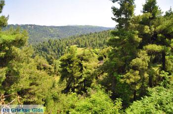 Mooie Natuur Noord-Evia | Griekenland | De Griekse Gids foto 1 - Foto van De Griekse Gids
