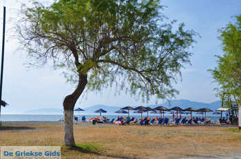 GriechenlandWeb.de Pefki | Noord-Evia Griechenland | GriechenlandWeb.de foto 5 - Foto GriechenlandWeb.de