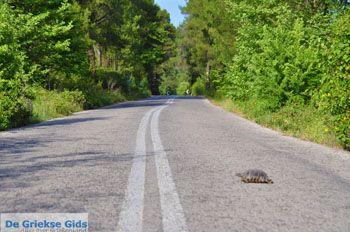 Route Pefki - Agia Anna | Evia (Euboea) - Foto van De Griekse Gids