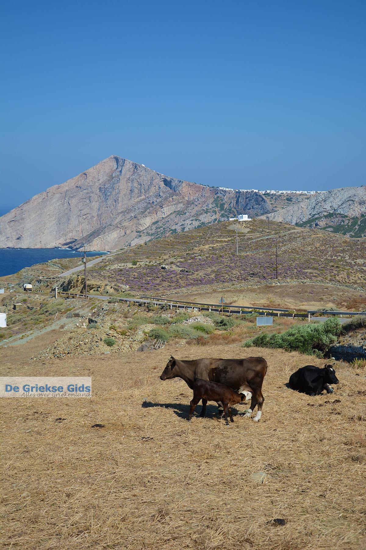 foto Ano Meria Folegandros - Eiland Folegandros - Cycladen - Foto 242