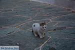 GriechenlandWeb Chora Folegandros - Insel Folegandros - Kykladen - Foto 13 - Foto GriechenlandWeb.de