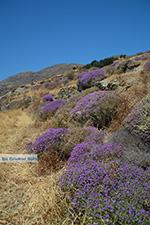 Folegandros - Eiland Folegandros - Cycladen - Foto 185 - Foto van De Griekse Gids