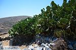 Folegandros - Eiland Folegandros - Cycladen - Foto 186 - Foto van De Griekse Gids