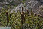 Folegandros - Eiland Folegandros - Cycladen - Foto 191 - Foto van De Griekse Gids