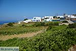 Ano Meria Folegandros - Eiland Folegandros - Cycladen - Foto 209 - Foto van De Griekse Gids