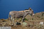 Ano Meria Folegandros - Eiland Folegandros - Cycladen - Foto 211 - Foto van De Griekse Gids