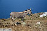 Ano Meria Folegandros - Eiland Folegandros - Cycladen - Foto 212 - Foto van De Griekse Gids