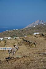 Ano Meria Folegandros - Eiland Folegandros - Cycladen - Foto 218 - Foto van De Griekse Gids