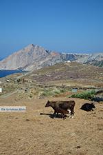 Ano Meria Folegandros - Eiland Folegandros - Cycladen - Foto 242 - Foto van De Griekse Gids