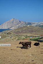 GriechenlandWeb.de Ano Meria Folegandros - Insel Folegandros - Kykladen - Foto 242 - Foto GriechenlandWeb.de