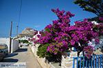 Chora Folegandros - Eiland Folegandros - Cycladen - Foto 266 - Foto van De Griekse Gids