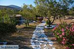 Livadi Folegandros - Eiland Folegandros - Cycladen - Foto 276 - Foto van De Griekse Gids