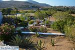 Livadi Folegandros - Eiland Folegandros - Cycladen - Foto 279 - Foto van De Griekse Gids