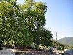 Plein in Ano Pedina foto 1 - Zagori Epirus - Foto van De Griekse Gids