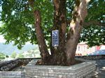 Ano Pedina foto4 - Zagori Epirus - Foto van De Griekse Gids