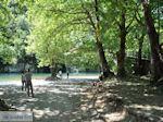 Voidomatis rivier bij Aristi foto 1 - Zagori Epirus - Foto van De Griekse Gids