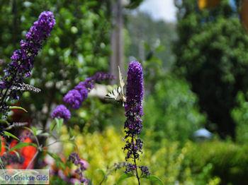 Vlinder in tuin hotel Porfyron in Ano Pedina foto 3 - Zagori Epirus - Foto van De Griekse Gids