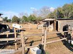 GriechenlandWeb.de Platanorema nabij Gomati 002 | Athos gebied Chalkidiki | Griechenland - Foto GriechenlandWeb.de