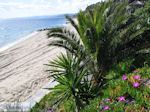 Mooie stranden nabij Eagles Palace Ouranoupolis foto 7 | Athos gebied Chalkidiki | Griechenland - Foto GriechenlandWeb.de
