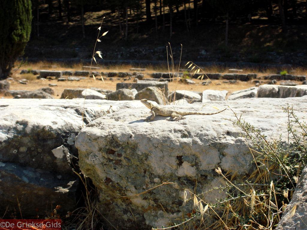 foto Asklepieion Kos - Griekse Gids Foto 9