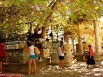 Kos stad - Griekse Gids foto 47 - Foto van De Griekse Gids