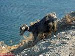 Thermen - Therma Kos - Griekse Gids foto 22 - Foto van De Griekse Gids
