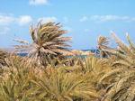 Vai Kreta - Foto 2 - Foto van De Griekse Gids