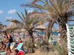 Vai Kreta - Foto 8 - Foto van De Griekse Gids