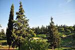 Groene omgeving in het hart van athene nabij de Akropolis - Foto van De Griekse Gids