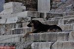 GriechenlandWeb Zwervershond aan de Propylaia van de Akropolis - Foto GriechenlandWeb.de