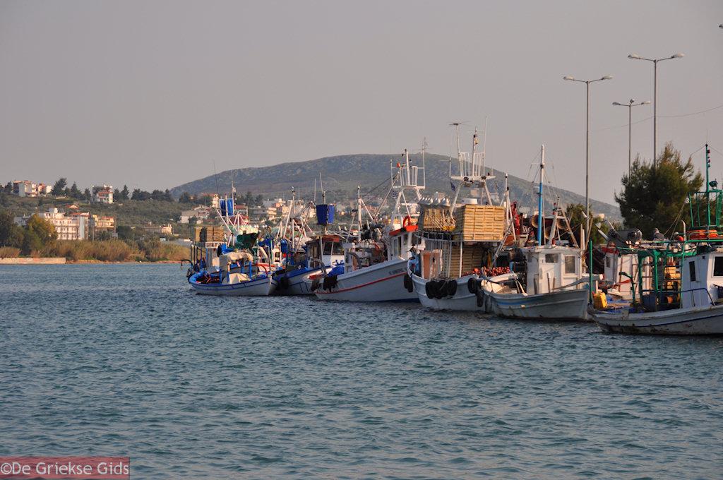 foto Haven Nea Artaki   Evia Griekenland