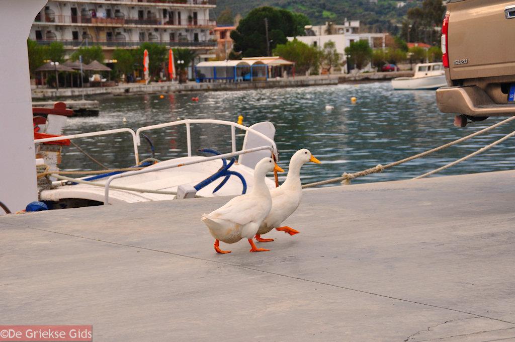 foto De mascotten van Marmari Evia