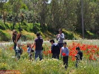 1 mei op Kreta - Foto van https://www.grieksegids.nl/fotos/grieksegidsinfo-fotos/albums/userpics/10001/normal_1-mei-kreta-skaleta.jpg