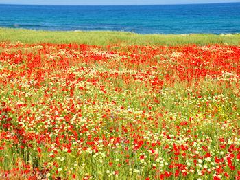 Prachtige bloemen uit Kreta